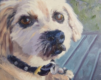 Dog-on Bench, 6x6 Original Oil Painting on Panel by Alice Leggett