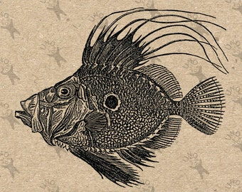 Vintage image John Dory Fish Instant Download Digital printable picture clipart graphic - fabric transfer, burlap, iron on etc HQ 300dpi