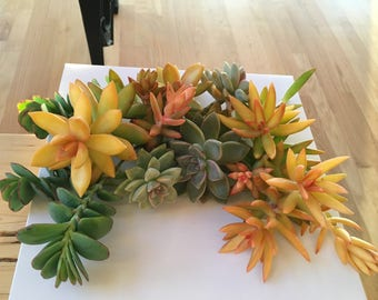 Large Succulent Gift Box Free Shipping