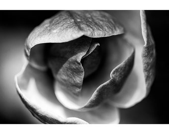 Black and white magnolia wall decor Macro flower print Nature fine art photography Botanical minimalismSpring blossomingFloral petals poster