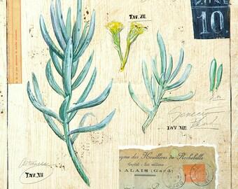 Senecio Print, Succulent Print, Botanical Print, Botanical Illustration, Succulent Illustration