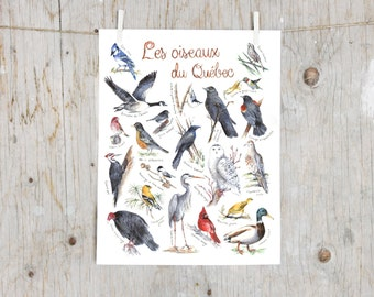 Print birds of Québec | Watercolor birds painting | Art mural Nature Print | Poster identification classification Birds | Gift ornithologist
