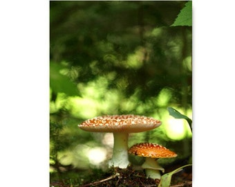 Amanita Mushroom Photograph Mushroom Print Affordable Home Photography Prints Nature Photography Decor Nature Lover Woodland Scene