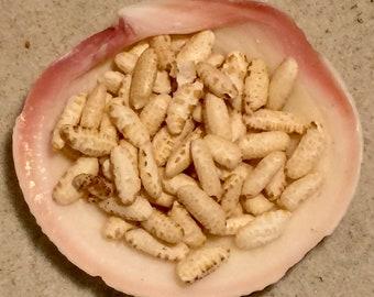 Puffed Whole Grain Brown Rice ~ Hermit Crab Food