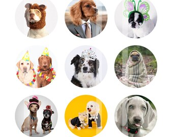 Funny Dogs Bottlecap Images - 4x6 Digital Collage Sheet - 1 inch Bottle Cap Images - Instant Download