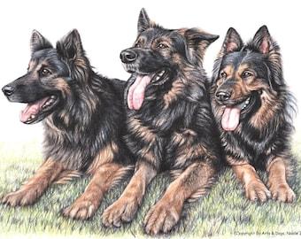 German Shepherd Dogs - Fine Art Print