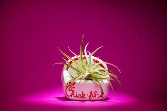 CHICKFILA FRIES PLANTER
