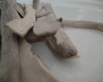 White Peony Root - Bai Shao Yao - Paeonia lactiflora