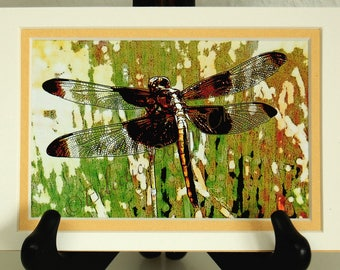 Dragonfly Altered Photo Matted Digital Print, Natural History Photographic Art, Dragonfly Art, Woodland Home Decor, Dragonfly Note Cards