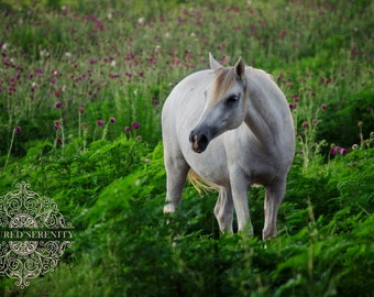 Enchanting white horse in field of flowers