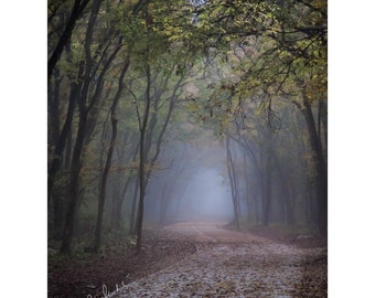 Walk into Mystery Fine Art Photography Foggy pathway Fall colors Falling leaves Texas winter Blue foggy magical woodland romantic home decor