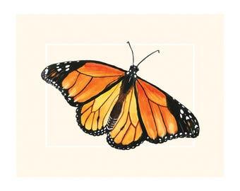 Archival Print: Endangered Butterflies & Moths