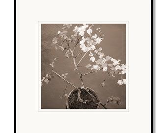 Black and white photography, sepia prints, Philippines, Bohol island, Loboc River, bridge flowers, flower pot, Asian flowers, decorative