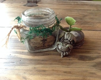 Little Mandrake root in the jar, Mandragora. Polymerclay, Hand Made!
