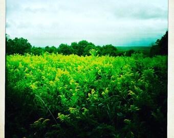 Green Field Nature Photo Digital Download