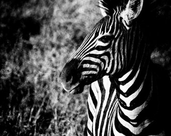 Wildlife Art - Zebra Wall Art - Black and White Photo - Monochrome Wild Animal Fine Art Photography