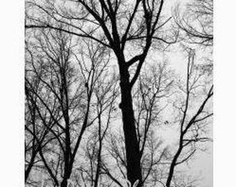 Abstract Winter Tree photography. Black & White Home Decor. Tree branch art Print. nature wall art Gray Black home decor, abstract photo art