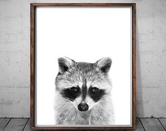 Raccoon Print, Raccoon Nursery Decor, Raccoon Wall Art, Black and White, Animal Print, Printable Art, Raccoon Wall Art, Animal Photo Prints