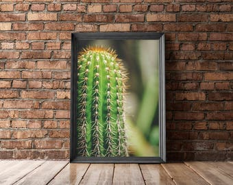 Cactus 11 B