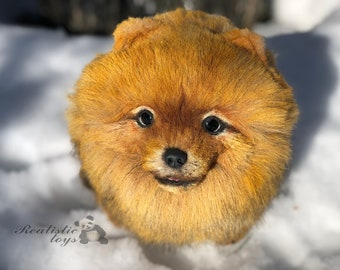 Pomeranian Spitz realistic collectible Artist toy handmade stuffed realistic animal OOAK teddy dog