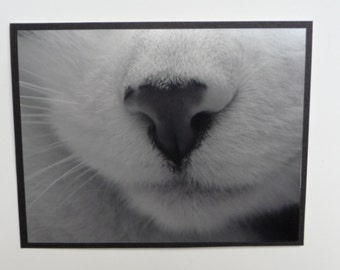 Black White Cat Nose Close Up Picture Card