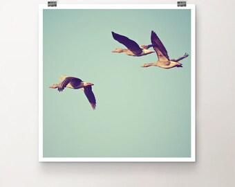 FlightLesson - FineArtPrint Nature Bird Birds Flock Geese Goose Flight flying Fly