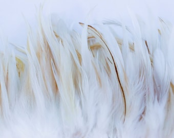 "Natural White hackle feathers 4"" - 6"""