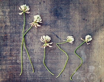 Fine Art Photo, Clover Wildflowers, Spell Kiss, Rustic Art, Flower Photo, Flower Typography, Wedding Gift, Love, Romance, Smooch, Square Art