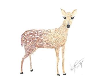 Deer Fawn Note Card- Blank Notecard