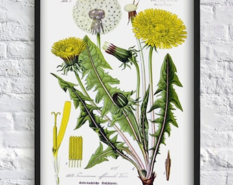 Vintage dandelion print wall art decor flower print botanical print plant wall art decor home decor floral green yellow