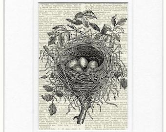 birds nest I dictionary page print