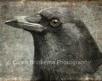 Portrait of a Crow #1