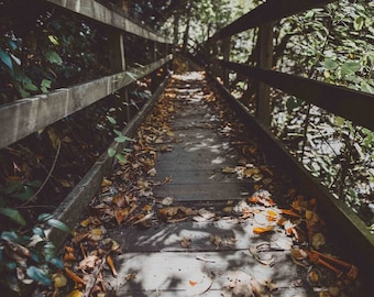 Bridge Fall in the Blue Ridge Mountains North Carolina - Blue Ridge Parkway, Stairs, Path, Hiking, Autumn, Leaves, Nature, Forest, Print