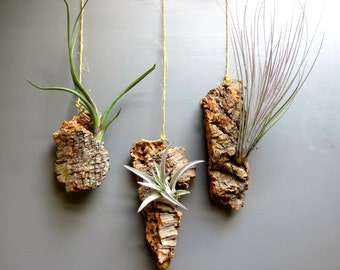 Vertical Garden with 3 Exotic Air Plants on 3 Pieces of Cork Bark - Fast FREE Shipping - 30 Day Guarantee - Live Air Plant Wall Hanging