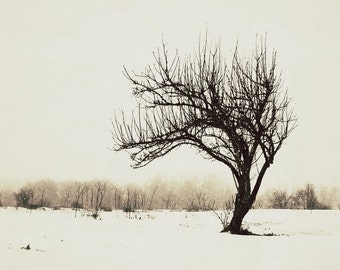Aluminum Photo Panel:  Apple Tree in Winter-1