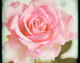 Nature photography, Rose, Flowers, Pink, Hearts, Romantic, Ttv, Vintage, Retro.