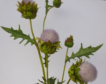 Giant thistle flower tinge of pink Scottish mothers day gift