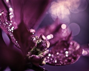 Macro Photography abstract art Purple plum sparkly sparkles romantic women for her flower photograph - Sparkles - 11x14 Fine Art Photo Print