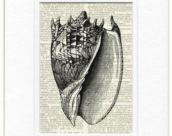apple shell artwork print