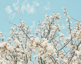 cherry blossom photo, white flowers, bedroom art, home decor, nature prints, nature photography, white cherry blossoms, cherry blossoms