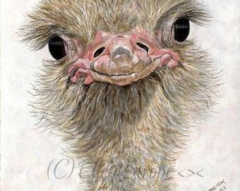 PRINT, Ostrich, 5 X 7, Giclee Print, bird decor, ostrich decor, birds, Ellen Strope, home decor