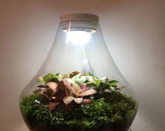 Handmade fittonia, moss and fern terrariums