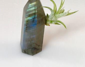 Labradorite Crystal Point Air Plant Garden, Little Something, Friend Gift, Spiritual Gift under 25
