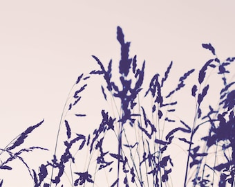 Wildgrass at sunset (original photographic print)