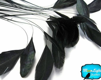 Black Feathers, 1 Dozen - BLACK Stripped Coque Tail Feathers: 343