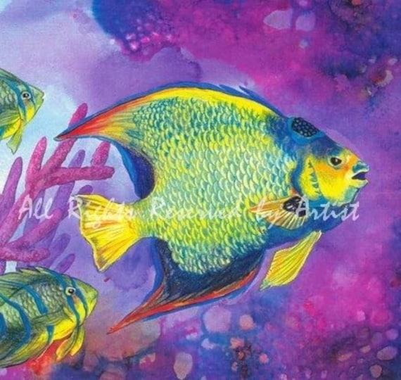 Queen Angelfish Ocean ...