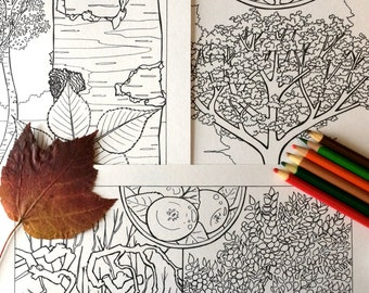 5 Tree Coloring Pages -  PDF