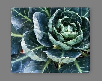 Brussels Sprouts Garden Photo on Canvas [2]