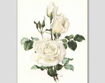 """Vintage Flower Art, White Rose Print, 1960s """"Virgo"""" White Home Decor No. 17"""