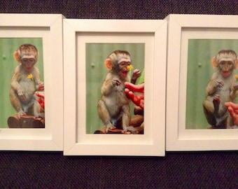 vervet monkey triple photograph cute baby animal nature flower embrace life